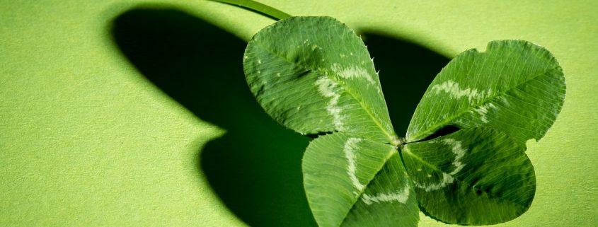 trèfle à 4 feuilles