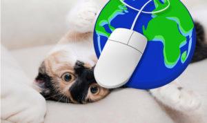 chat jouant avec un globe