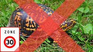 tortue avec panneau fin limite vitesse 30