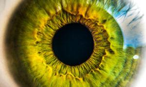 pupille en gros plan